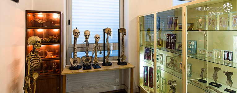 Museum Of Anatomy Of Faculty Of Medicine